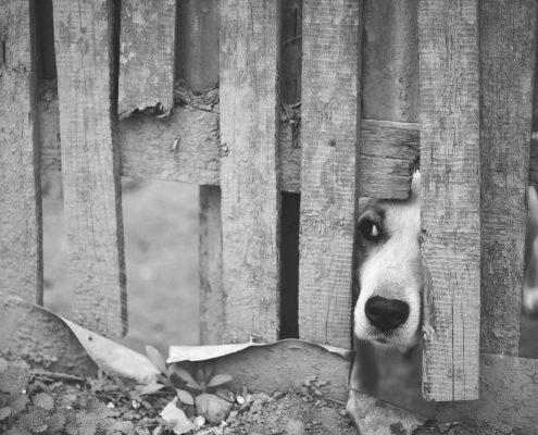 dog-1210565_1280