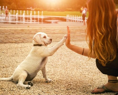 Petpreneure Business-Community für Tierprofis
