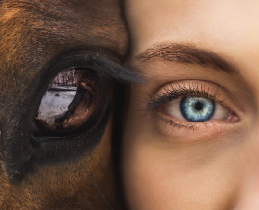 Mensch-Tier-Psychologie